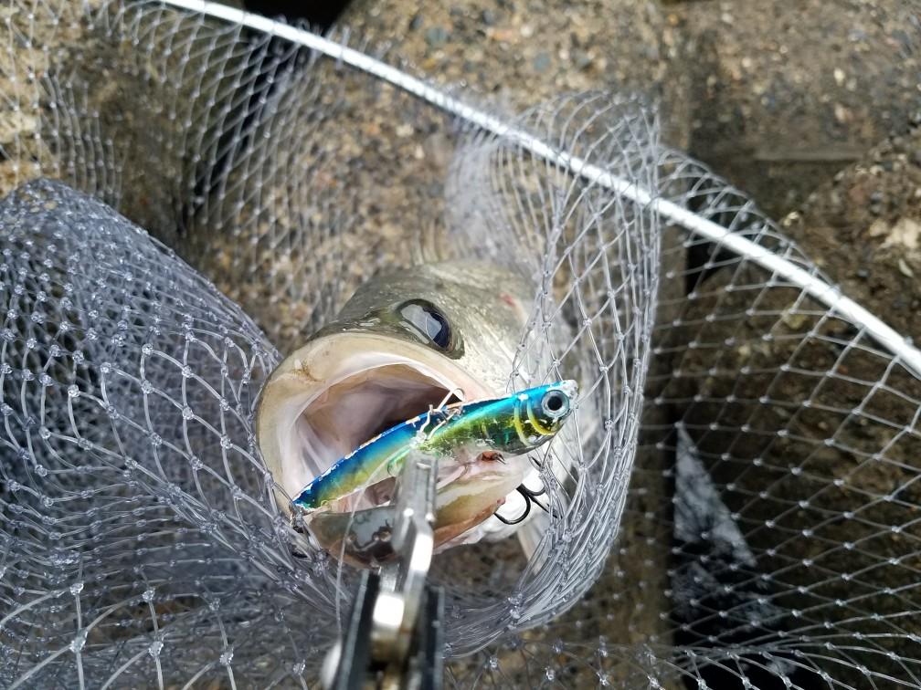 シーバス釣り ランディングネット