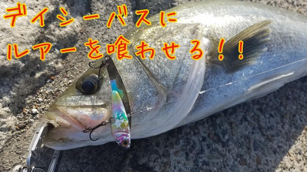 シーバス釣り ルアー 旧江戸川