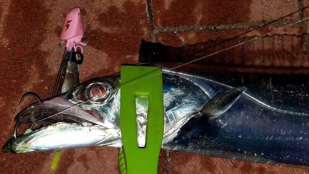 太刀魚ゲッター 太刀魚釣り
