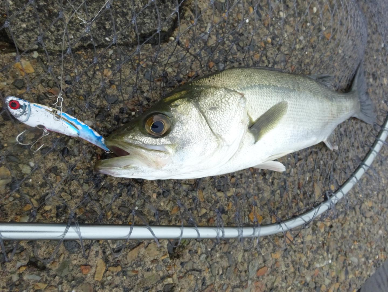 シーバス釣り ポイント