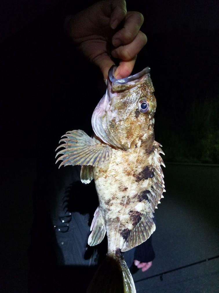 ふれーゆ裏釣りポイントカサゴ