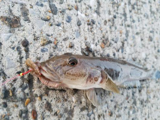 海釣り 初心者 魚