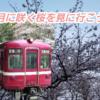 三浦半島の河津桜で一足お先に桜の美しさを楽しみに行こう